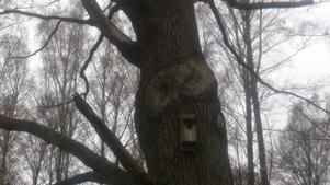 Ser ni ugglan i trädet? Frågar Helena Leske.