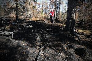 Marken på Älgberget är svartbränd efter sommaren, men det skapar  miljöer för nytt liv.