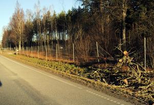 Längs riksväg 51 mellan Glottra och Svennevad låg under morgontimmarna ett nedblåst träd över vägen. Det sågades sedan upp.
