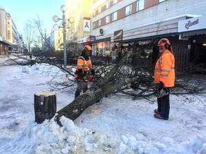 På onsdagsmorgonen föll lindarna på gågatan, delen Carlavägen – Eriksgatan. Lindarna kommer förmodligen att ersättas med pelarbärapel som kan bli åtta – tio meter höga.