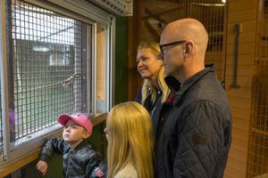 Tony Rickardsson med familj tittar på orangutanger. Foto: David Söder