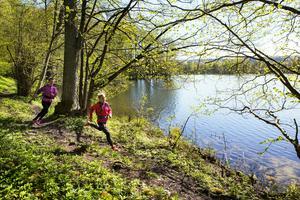 I september hålls evenemanget Billingen hike & trail för första gången. Foto: Roger Borgelid/Turistrådet Västsverige