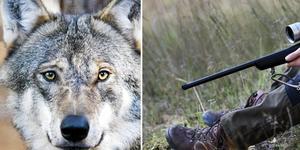 En man i Norberg som blev oskyldigt misstänkt för jaktbrott, får nu skadestånd för tiden han satt frihetsberövad.