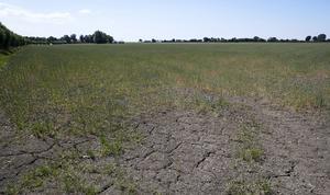 Det torra vädret har fått stora konsekvenser för framförallt svenska bönder.