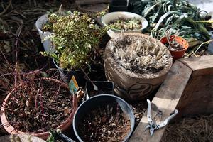 Våren är på väg i Annas växthus.