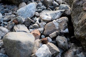 Mellan stenarna ligger det både det ena och det andra.
