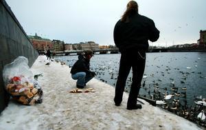 Att inte mata fåglarna är ett självklart råd om du vill undvika fågelspillning. Bild: Henrik Montgomery /TT