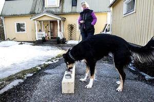 Ann Nygård med Border Collien Ada tränar doftsök hemma på gården.