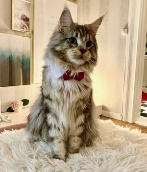 Katten Rasmus. Foto Martin Hellgren