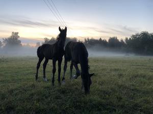 Tidig morgon hos fölisarna. Foto: Rolf Larsson