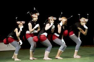 Myggorna i Furuviks cirkus surrade inte utan bjöd på sång och dans.