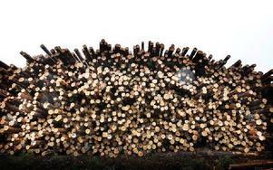 Bara en del av de stockar som ligger intill Lungsjöån. Foto: Staffan Björklund