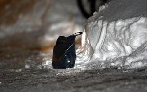 Den svarta väska som orsakade det stora pådraget. FOTO: STAFFAN BJÖRKLUND