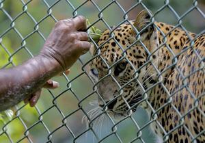 Det går inte att försvara ur ett moraliskt perspektiv syftet till att djur stängs in, skriver Joakim Bergros.