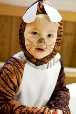 Noel är en liten tiger. Bild: Lena Larsson.