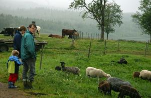Öppet landskap. Djur betyder också öppet landskap, som här i Gussarvshyttan hos Per Herrmann där får, kor och andra djur håller landskapet öppet. Här syns en besökande familj vid fårhagen. Foto:Roland Berg