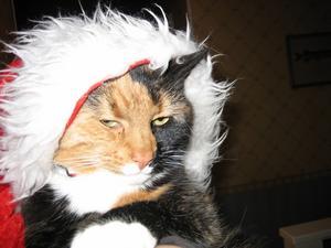 Våran katt Raja ville också passa in i julstöket bland julklapparna och alla julprydnader. Denna bild tog jag förra julen då Raja sprang efter oss när vi julstökade hemma.