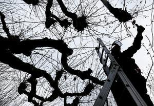 En man från Falu kommun har dömts till dagsböter för snatteri. Däremot frikänns han från misstankarna om att ha hotat en sommarjobbare som klippte ner träd intill mannens bostad. OBS: Bilden är tagen i ett annat sammanhang.Foto: Michael Probst/TT