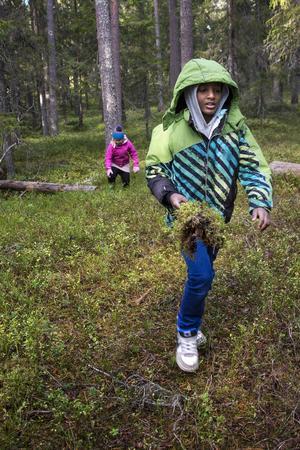Sami Nesredin har hämtat mossa som ska undersökas med lupp.