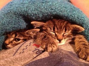 Här ligger Ester och Iris och myser under en filt i mitt knä.