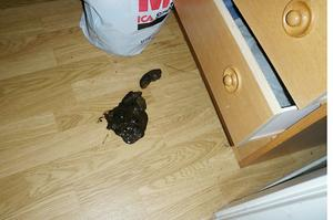 På golvet låg en hög med exkrement från hunden.