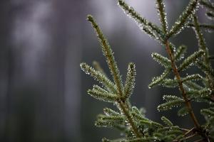 Sådant var tillståndet då de gröna växterna bildades vilka avgav syre och tog upp koldioxid, skriver Ove Lennström.