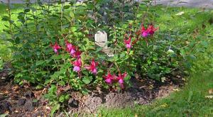 På kyrkogården i Hille ligger en okänd man begravd sedan 1975. Han vilar under ett litet murket träkors och varje vår planterar kyrkogårdsarbetarna en blomma på hans grav.