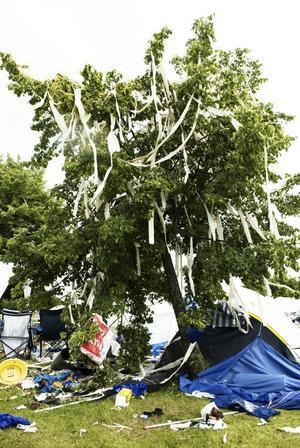 En estetisk uppenbarelse. Någon hade, med mycket omsorg, dekorerat ett träd på campingen.