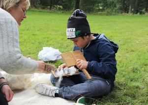 Margit Kristoffersson visar Sebastian Arbornos hur man kardar ull.