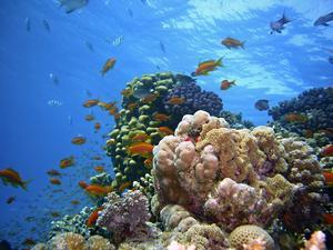 Korallrev har funnits i en halv miljard år och då upplevt massor av klimatförändringar, många av dem snabbare än de moderna, skriver insändaren. BIld av joakant från Pixabay.