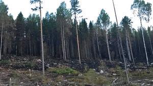 Delar av den släckta branden i Hammarstrand. Foto: Tony Björkvall