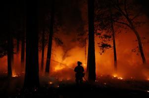 Vi kommer behöva handskas med fler skogsbränder framöver. Detta är från Kalifornien 2018. Foto: AP Photo/John Locher