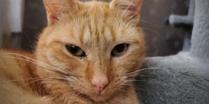 Katten Morris.