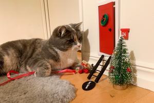 Svea är en 2-årig huskatt som ligger och väntar otåligt på att Nissa ska komma in genom dörren. Bild: Pernilla Stolt