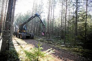 Foto: Arkivbild.Miljoninvesteringarna i Fiskarhedens sågverk och dessutom företaget Setras satsning med en fabrik för korslimmat trä i Långshyttan – antas ge en positiv signal till skogsägarna.