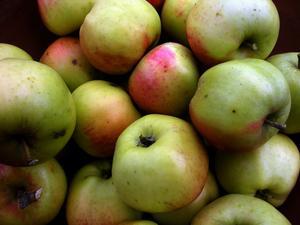 Trots en rekordstor skörd lyser de svenska äpplena med sin frånvaro i butikerna, skriver Anders L. Bild: Hasse Holmberg/TT