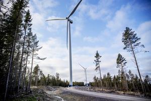 Vad man ska göra en vindstilla, mulen och kylslagen vinterdag verkar inte bekymra dessa