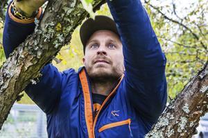Klas Ebeling startade egen arboristfirma år 2012 när han flyttade hem till Bollnäs. Innan dess har han arbetat som arborist i Stockholm.