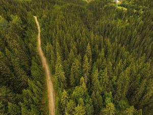 Skogen spelar roll för både företag och fritid. Foto: Solum Stian Lysberg/TT