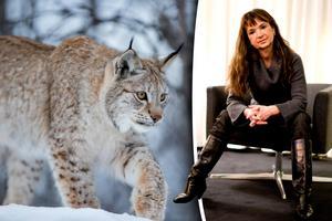 Christina Lindberg menar att det är anmärkningsvärt att vi har licensjakt på en rödlistad art och vill stoppa lodjursjakten, som börjar den 1 mars. Bild: Heiko Junge/TT / Adam Ihse/TT