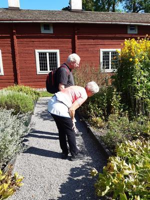 Koll av växter i trädgården. Foto: Britt Berglund