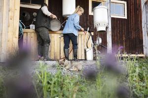 Disk och rengöring av utrustning ställs också under höga krav för att kunna sälja den opastöriserade mjölken.