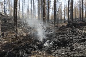 Här och där pyr det fortfarande. Brandmännen säkrar först och främst områden nära vägarna, men en bit in i skogen kan det glöda i stubbar och myrstackar.