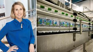 Nu vill Spendrups bryggeri ha 1000 goda idéer för en bättre miljö – jury ska ta ut idéer som kan bli till nytta