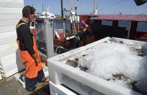 Vår linje är att vi, oavsett fiskemetod, ska se till att jobben i det kustnära fisket finns kvar, och att fisket är långsiktigt hållbart. Detta är en politik som har en bred förankring i Sverige och vi håller fast vid denna kurs, skriver Ulrika Falk, Hanna Westerén och Markus Selin. Foto: Johan Nilsson, TT.