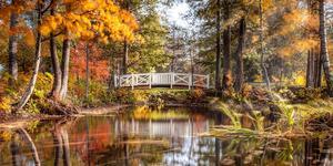 """""""Bilden är tagen vid Måns Ols i vecka 42. Perfekta färger i träden och ett härligt sidoljus som gjorde sitt till. Bilden är tagen med lång exponeringstid vilket gör att det som rör sig, såsom vatten och grenar, blir lite diffusa och suddiga."""" Bilden är beskuren. Foto: Richard Jenderklint"""