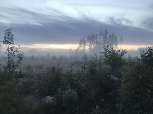 De där som, verkade det som, såg varenda soluppgång värd namnet där de älgade fram i markerna innan de slog sig ner på daggvåt tuva för att se dimman lätta, skriver signaturen. Foto: Stefan Hessman