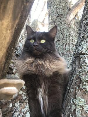 213) Katten Morris älskar att klättra i träd men han trivs allra bäst när han sover bredvid matte i sängen. Morris är en hankatt på tre år och han älskar att krypa in i allt som står öppet. Speciellt familjens tvättkorg och alla papperskassar som existerar! Foto: Anna Eriksson