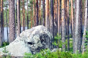 Därför är det väldigt viktigt att vi lyssnar på våra lokala skogsägare och lantbrukare, skriver debattörerna.