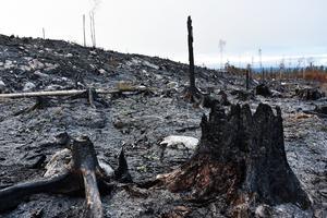 De 417 hektar skogsmark som brann på Äxingmyrkullen har flera ägare, där försäkringsersättning och ersättning från bildande av naturreservat utreds.